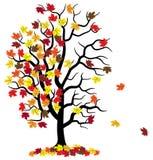 Tree loses fall foliage Stock Photo