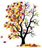 Tree loses fall foliage Stock Photos