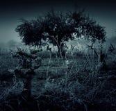 Tree loss cloudy. Tree sad fog in desert field, nature stock photo