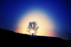 Tree loss cloudy Royalty Free Stock Photography