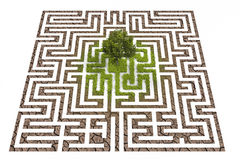 Tree lost in endless labyrinth Royalty Free Stock Photos