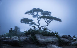 Tree lost in fog. A tree in hill top in Nelliyampathy forest standing alone in fog Stock Photography