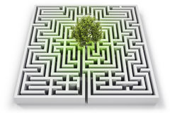 Tree in lost in labyrinth. On white Royalty Free Stock Photography