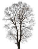 Tree with a lot of bare branches Stock Photo