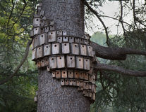 Tree with a lot of bird houses Royalty Free Stock Photo