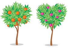 Tree love. Vector illustration, orange tree and a tree with hearts Stock Images