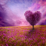 Tree of love. In spring Royalty Free Stock Photos