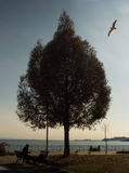 Tree of love. Beautiful Greece in the spring. Birds are flying. Tree in the shape of heart. Symbol of love Stock Image