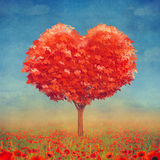 Tree of love in field, valentines day background Stock Photos