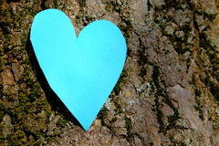 Tree love. Heart on a rough treebark background - as a concept for love or environmentalism Stock Image