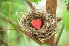 Tree Love Nest Heart Valentine Green. A birds nest with a red love heart resting in a tree Stock Photography