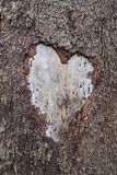 Tree Of Love 3767. A strong tree scarred by love. An empty heart waiting to be filled royalty free stock images