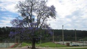 A flowery tree - Purple flowers Royalty Free Stock Image