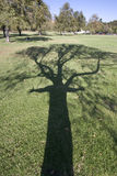 Tree lover. Shadow of a tree and a man's arms Royalty Free Stock Photography