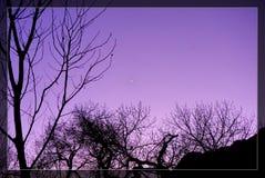TREE LOVING SUNSET stock image