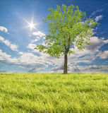 Tree in lush green grass under bright sun Stock Images