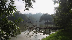 The tree lying in the water in the city of Kandy. In Sri Lanka stock video footage
