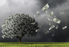 A tree made of hundred dollar banknotes on a background of dark sky. Stock Photos