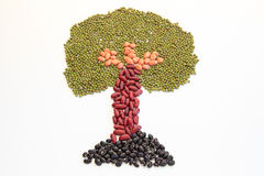 Tree made of nuts Royalty Free Stock Images
