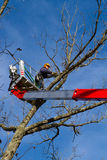 Tree maintenance. Professional arborist in cherry picker bucket doing end of year cleanup work, trimming and pruning tree Royalty Free Stock Photography