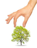 Tree and a male hand Stock Photos