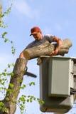 Tree Man Royalty Free Stock Photos