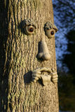 Tree Man. Fun Picture of Tree with a Face Sticking out His Tongue Stock Images