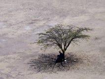 Tree and man in desert plain