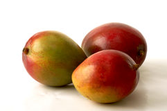 Tree mangoes Royalty Free Stock Photo