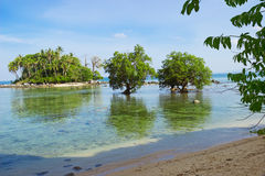 Tree mangrove in area of low tide. Thailand Royalty Free Stock Photography