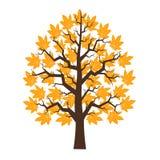 Tree maple with orange leafage. Illustration Royalty Free Stock Photo