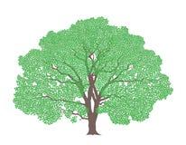 Tree. Maple Stock Photo