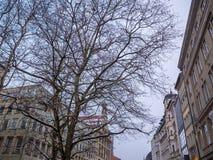 Tree in the marienplatz square munich, Germany.  Royalty Free Stock Image