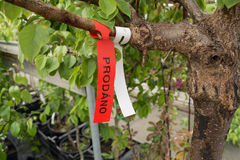 Tree marked for sale Stock Photos