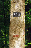 Tree marking paint in Fontainebleau forest royalty free stock photo