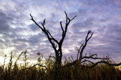 Tree in the Marsh. A dead tree in the marsh in south Louisiana Royalty Free Stock Image