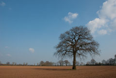 Tree in marshes Stock Image