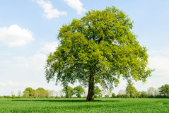 Tree in marshes Royalty Free Stock Photography