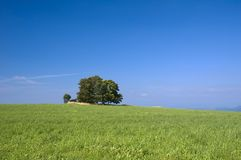Tree and meadow. Solitary tree in the summer meadow with the cloudless blue sky Royalty Free Stock Photography