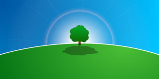 Tree in the meadow. A tree standing in the centre of a lush green meadow. The sun in the background Stock Image