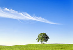 tree and meadow Royalty Free Stock Image