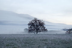 Tree in Meadow Royalty Free Stock Photo