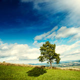 Tree on the meadow Royalty Free Stock Image
