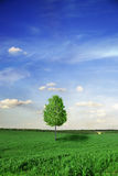 Tree and meadow Royalty Free Stock Images
