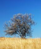 Tree on a meadow. A dry autumn grass and a lonely tree Royalty Free Stock Images