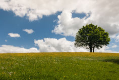 Tree on meadow against blue sky Royalty Free Stock Images