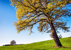 Tree at a meadow Stock Image