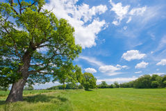 Tree, meadow and a blue sky. The picture shows a tree, a meadow and a sunny, blue sky royalty free stock photography