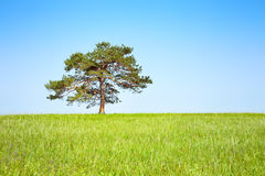 Tree on meadow Stock Images