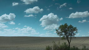 Tree, meadow and clouds stock video footage